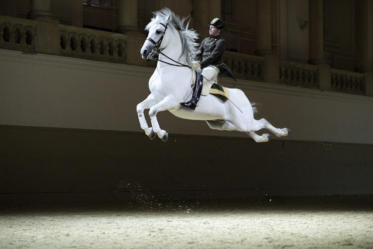Hiszpańska Szkoła Jazdy w Wiedniu, fot. Rene van Bakel