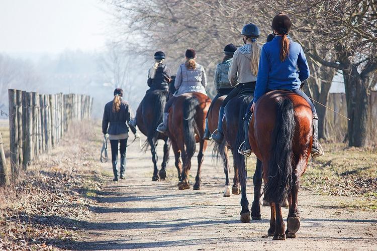 Koń i jeździec w ruchu drogowym, Equista.pl, przepisy prawa, znaki drogowe