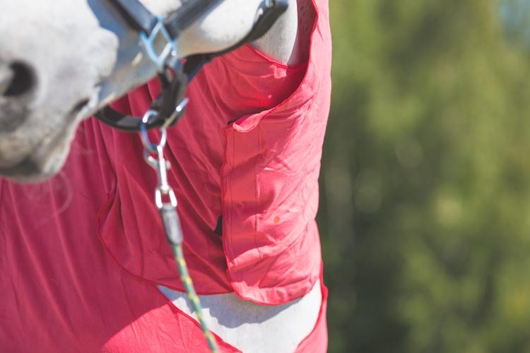 Test: Derka osuszająca z mikrofibry Full Neck Fouganza www.equista.pl Decathlon