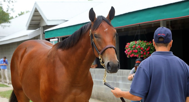 Roczna klaczka (American Pharoah x Tricky Creek), fot. Keeneland September Yearling Sale