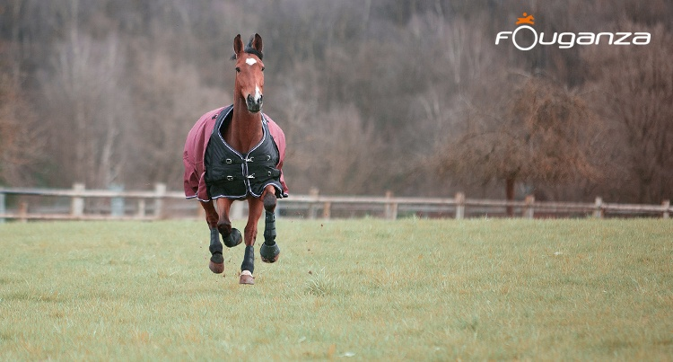 81c2a78d3b1af Equista - with passion for all that is equestrian