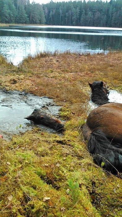 akcja ratunkowa, pięściarki ratują konie, polska kadra narodowa