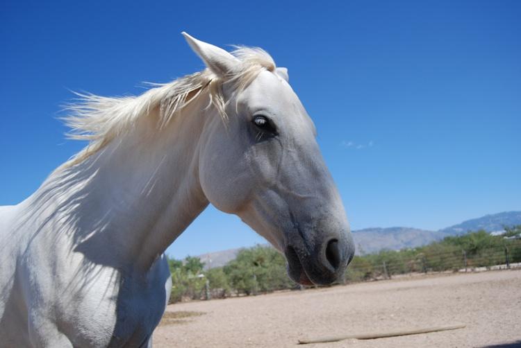 Prawo: Rękojmia w przypadku sprzedaży konia www.equista.pl