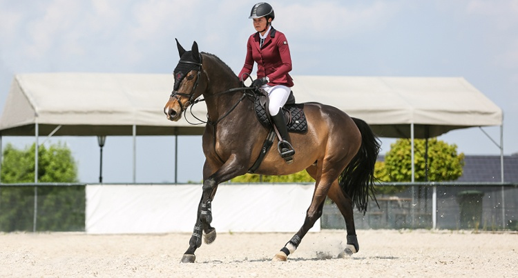 Test: Frak The One Fera Equestrian