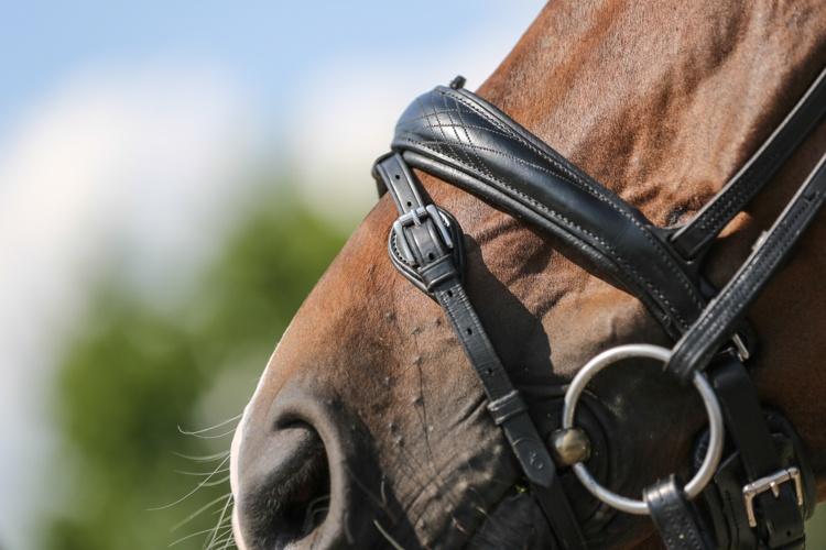 a5ea0069ebe20 Samo ogłowie dobrze sprawdza się u koni z wrażliwą potylicą i uszami.  Dzięki jej profilowanemu kształtowi każde zwierze chętnie daje sobie ubrać  tranzelke, ...