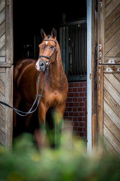 Boliwia, Wechta Equestrian 2015