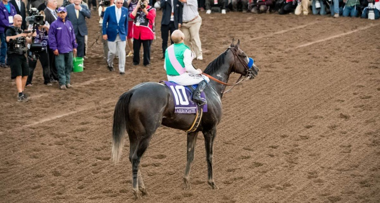 Arrogate fot. Eclipse Sportwire/Breeders' Cup Photo for Juddmonte