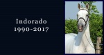 In memoriam: Indorado