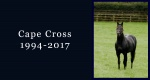 In memoriam: Cape Cross